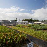 Giới thiệu vườn ươm thủy sinh Florida