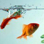 Muối trong thủy sinh – Dùng sao cho đúng?